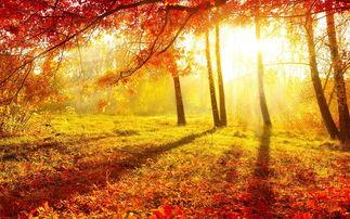 古代描写秋天的诗词