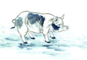 属猪的12月运程(属猪2018年运势及运程)