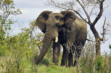 原始神秘探秘非洲大陆狂野的动物世界