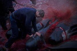 丹麦小岛迎传统屠鲸节 血染大海 6