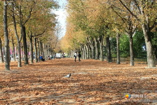 香榭丽舍大街旁的落叶