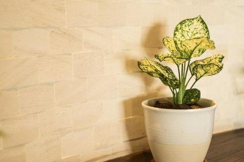 养花要用到薄膜吗