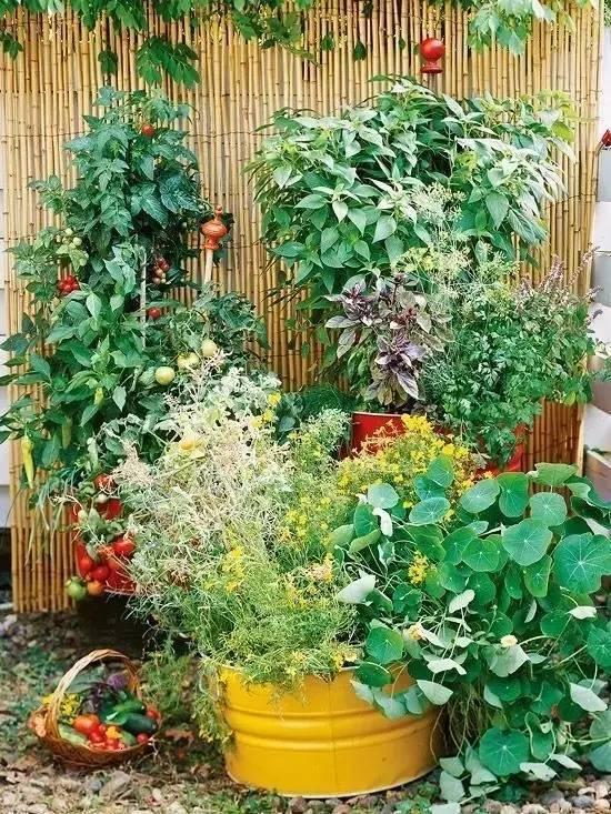 顶楼准备种菜养花怎样浇楼板