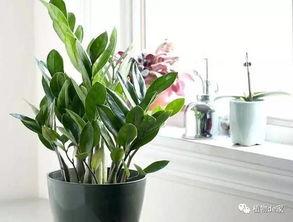为什么养花必须浇水而养树却没有人给它浇水还能快乐的成长