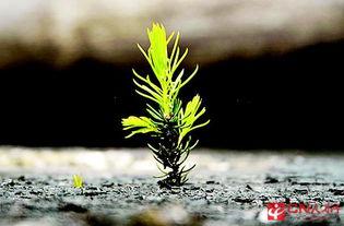关于逆境中成长的名言