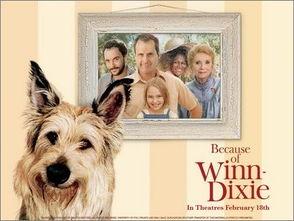 宠物放映室 精彩动物电影手册之人狗情深