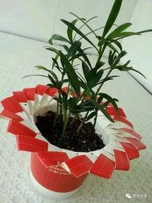 养花家里有收藏花盆吗