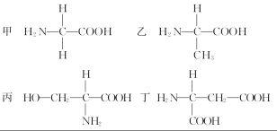 氨基酸的基础知识