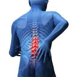 不同的腰椎间盘突出特点,决定不同的调理思路!  腰椎的主要特征不包括