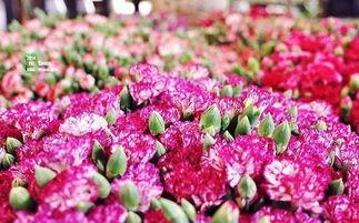 我爱花爱养花