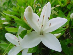 北师大版六年级下册第一课养花