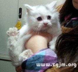 梦到抱着猫去医院