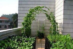 关注阳台菜园给你一种新的生活方式