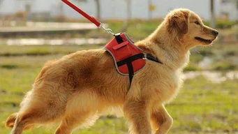 """市养犬办""""这遛狗绳有四米长吧"""""""