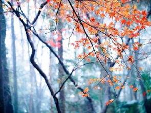 有关杭州秋天的诗句