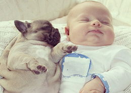 婴儿与小斗牛犬拥眠