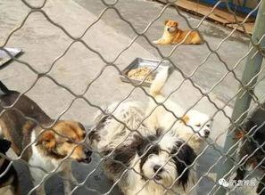 什么是违法养犬