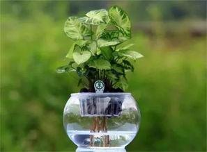 水养花信子多久换一次水