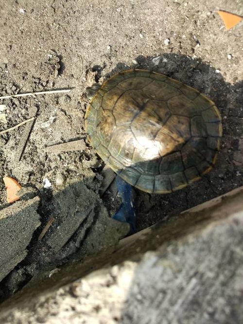 小海龟还吃什么东西
