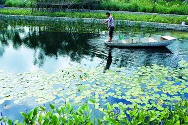 上海后滩公园净化黄浦江