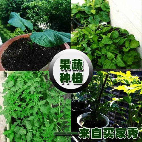 营养土种菜土养花肥盆景