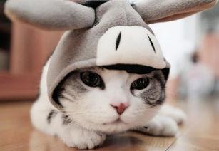 猫咪绦虫的潜伏期