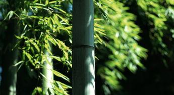 关于竹子的名言名句