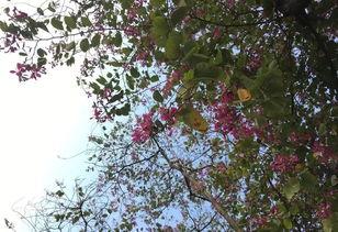 关于冬雨下的紫荆花诗句