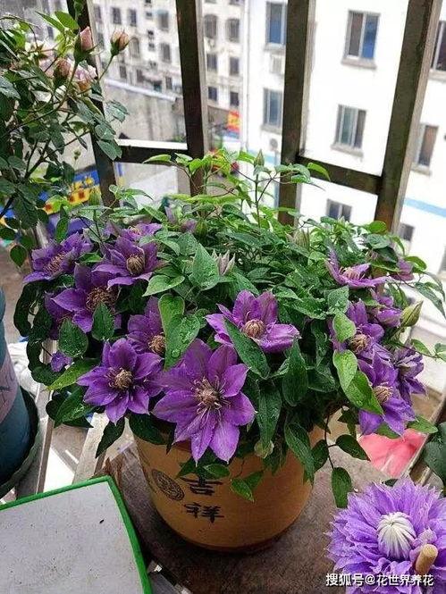 养花的益处是什么意思