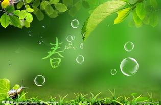 绿色背景 清新自然图片
