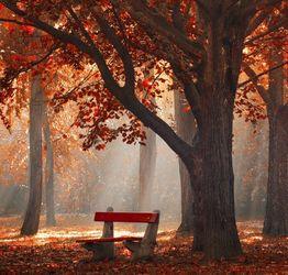 请用几个词语来描写一下秋天的景色