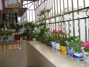 阳台养花室