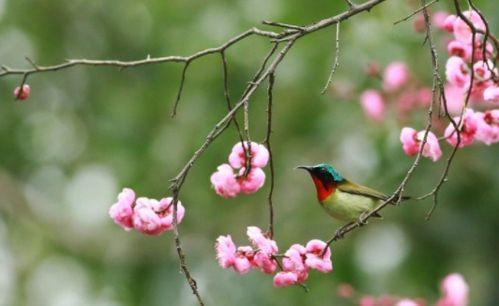描写春天悄悄来临的诗句