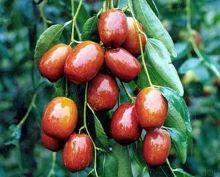 关于红枣和面在一起的诗句