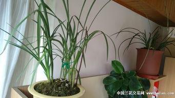 如何养花养草