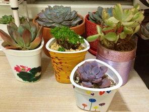 外卖盒改造养花