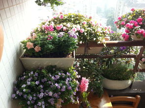 阳台冬天冷养花怎么办