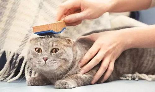 六个月的猫咪拿什么补充营养