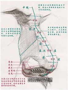 素描鼻子的画法