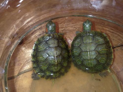 养三只龟风水
