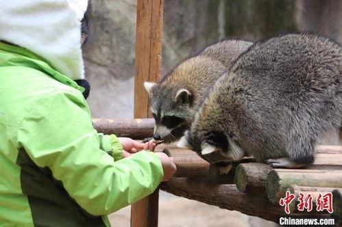 杭州野生动物世界动物品尝特色饺子过冬至