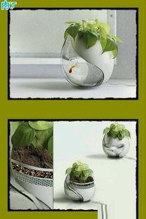 鱼和花一起养花盆