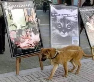 2017两会虐待动物建议纳入治安管理处罚
