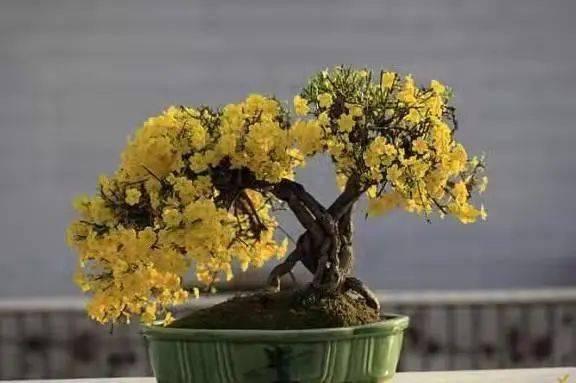 迎春树的知识树