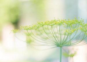 养花最好听的群名字