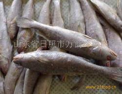 鳘鱼(怎样鉴别鳘鱼)