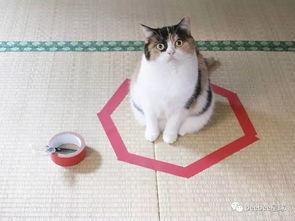 猫圈到底是个什么东西