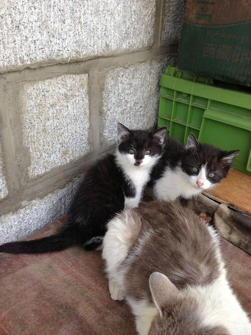 刚出生的小猫咪不拉屎怎么办
