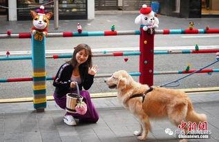 多地出台养犬新政,纵犬虐犬都将面临重罚为养犬人立规矩
