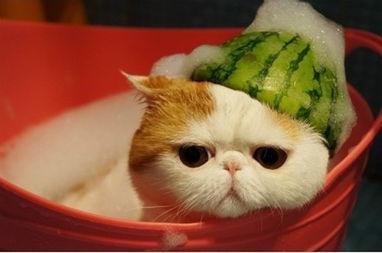 猫咪洗澡用的烘干机